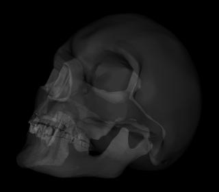 骸骨の3Dモデルに透視効果をつけた様子。本当にレントゲンっぽくなった・・・